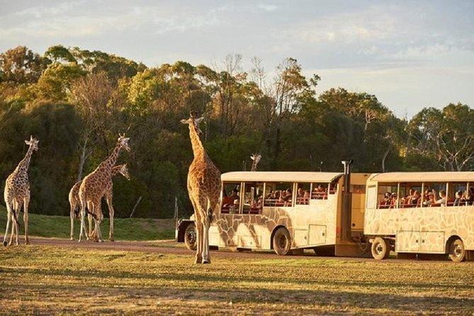 sunset-safari