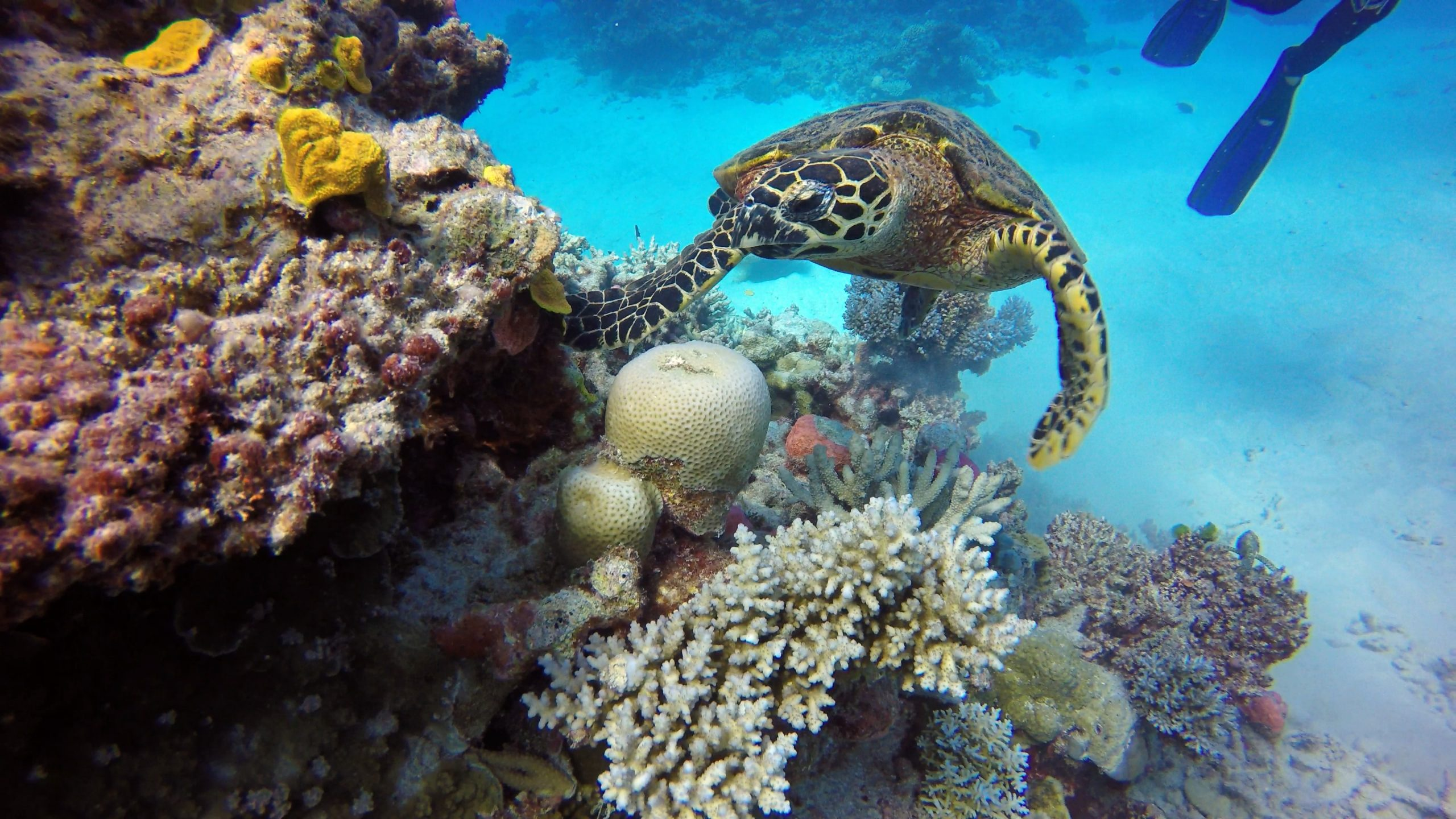 Aussie Quotes great-barrier-reef