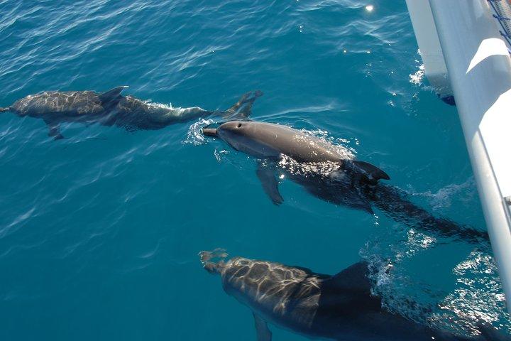 dolphin-watching-harvey-bay